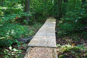 Cedar walkway and woodchips